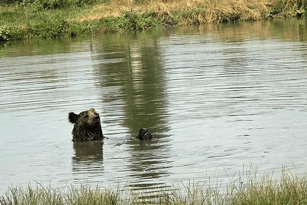 bear-parל-1