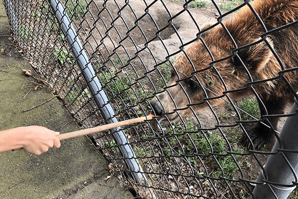 bear-park-2