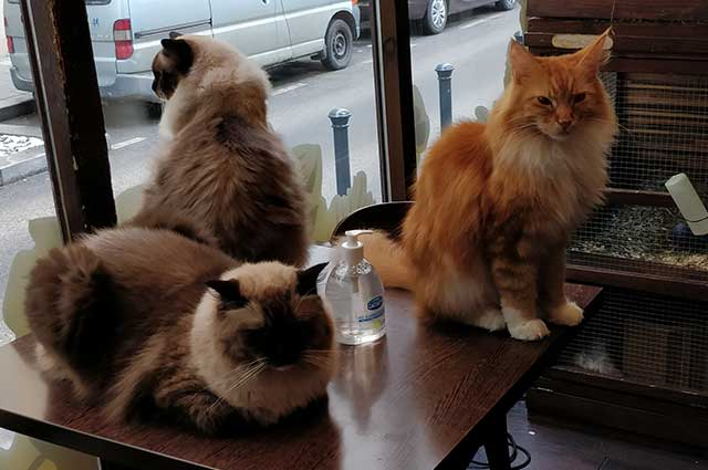 zoo-cafe1