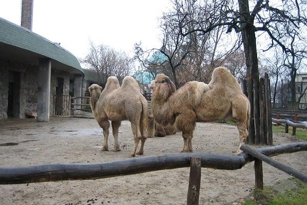 budapest-zoo-1
