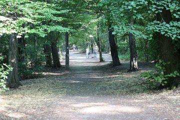 שמורת הטבע נורמפה (Normafa)