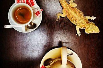 בית קפה עם חיות – Zoo Cafe